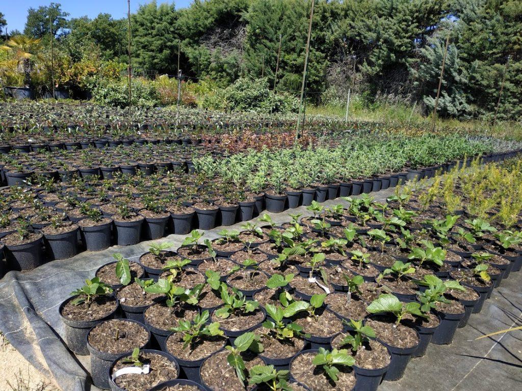 plantation pepinieres marcel