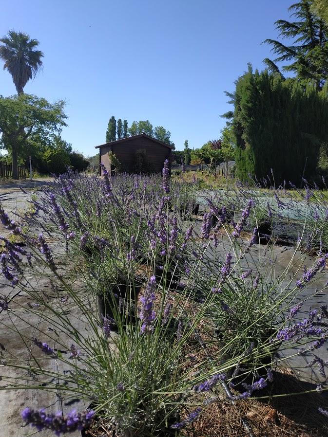 piepinieres marcel plantes couvre sol